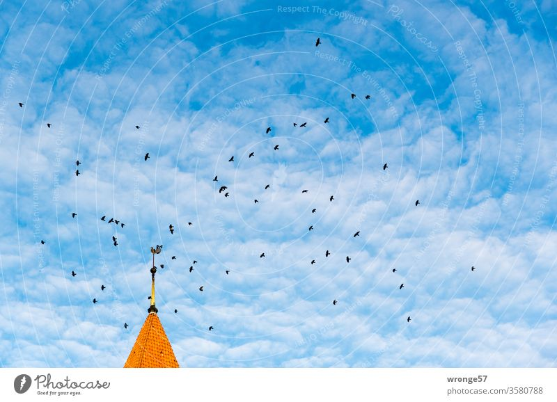 Jackdaws fly around the Schwaaner church spire under a slightly cloudy blue sky Raven birds Flock Flying Sky Exterior shot Church spire Deserted Colour photo