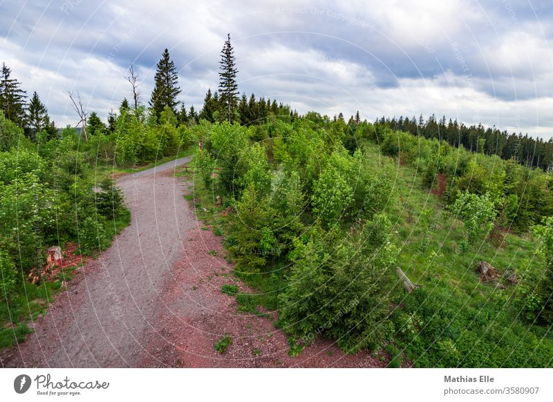 Thuringian Forest Forest path in the forest Nature Thueringer Wald Relaxation Environment green already Sky Beautiful weather Landscape Freedom Far-off places
