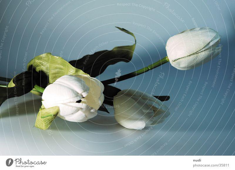 White Green Flower Blossom Near Tulip Depth of field Placed