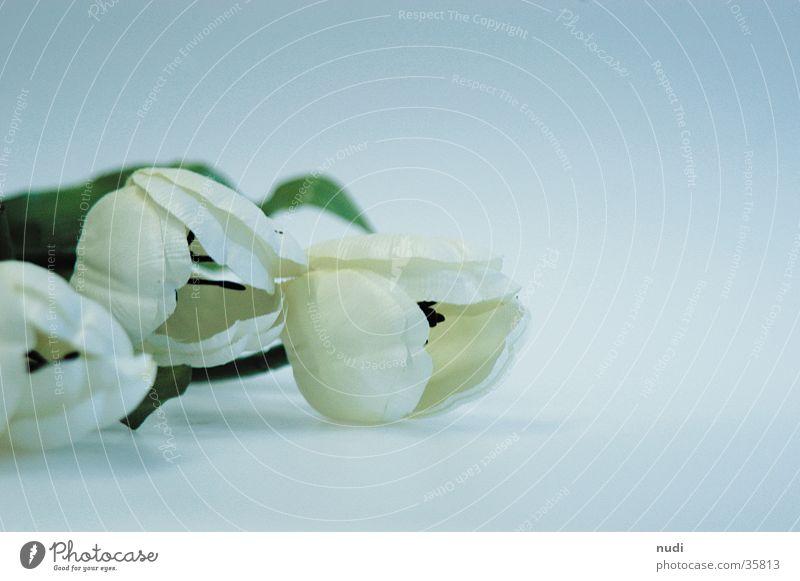 White Flower Green Blossom Near Tulip Depth of field Placed
