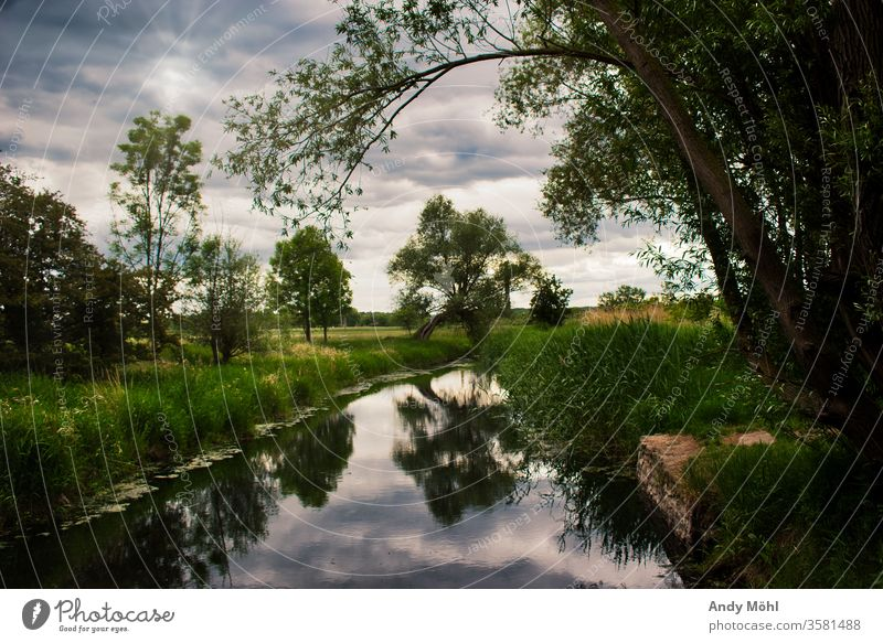 A Cloudy Sunday cloudy To go for a walk Forest evening mood Water River Nature Landscape Sky tree green Colour photo Exterior shot Clouds Brook Reflection Calm