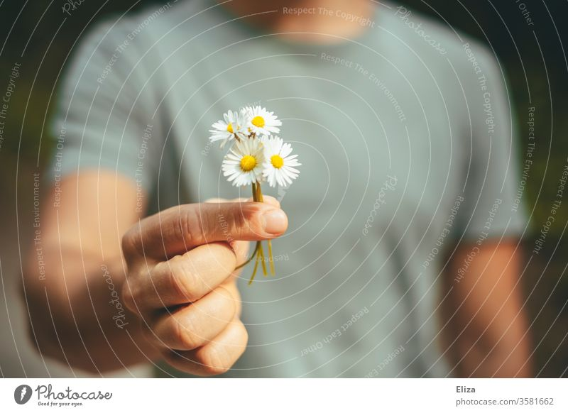 A man gives a bouquet of daisies he picked himself Daisy Ostrich Picked Affection bring flowers Bouquet spring bleed nice observantly Give home-picked by hand