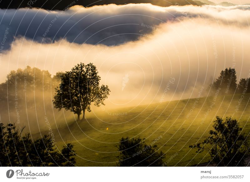 Misty start of the day with tree in the middle Start of day Fog Sunrise Dawn Smooth foggy Nature Landscape Morning Meadow Light Warm light Colour photo Contrast