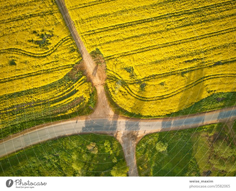 Dirt road in rapeseed flowering field, spring rural Aerial top view agriculture meadow summer colza path green yellow blossom aerial farm landscape outdoor