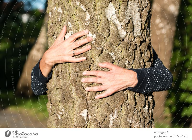 Hands of a woman clasp a tree trunk to find inner peace hands Woman Human being feminine Female senior Senior citizen Adults clench Encompass Tree trunk