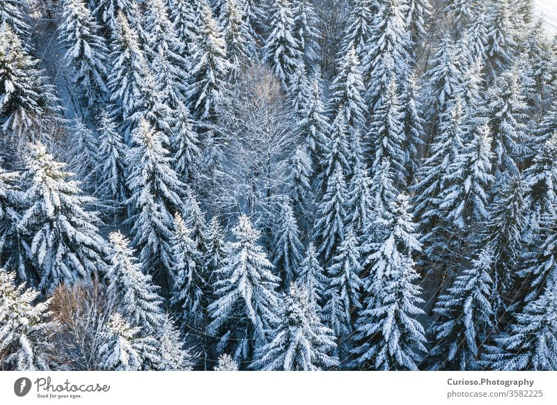 Mountain snow covered pine forest, top down aerial view. Winter landscape. winter above nature white season tree background cold beautiful frost snowy weather