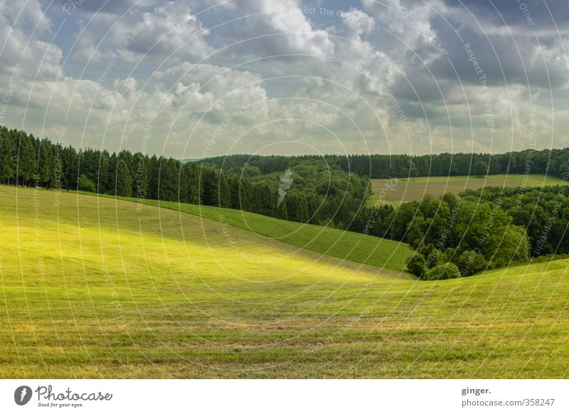 Light over the land Environment Nature Landscape Green Sunlight Lie Tree Forest Cloud formation Clouds Hover Valley Hill Pasture Smooth demarcated Border Field