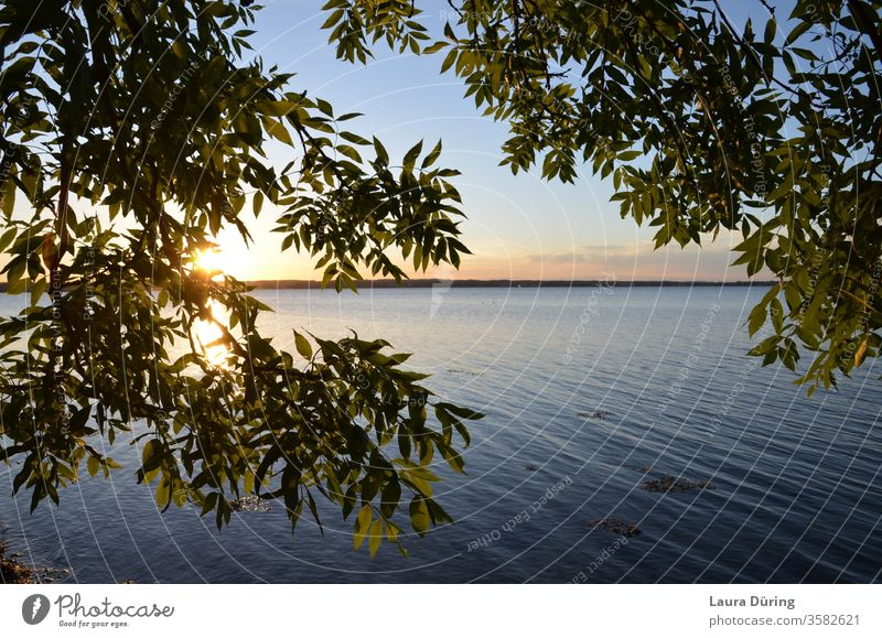 View through leaves to the sunset at the water Sunset Water Calm Baltic Sea Holnis Sunlight Horizon Ocean Sky Exterior shot Nature Summer Waves Evening