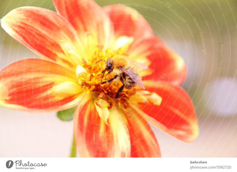 spot landing Summery Blossoming Fragrance Sunlight Colour photo Close-up Wild animal Pollen Blur Nectar Animal Exterior shot Animal portrait Grand piano To feed