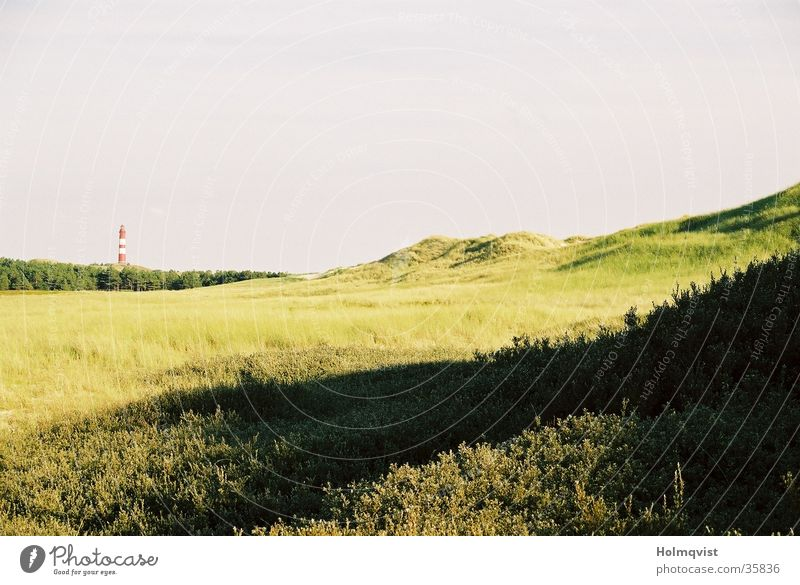 dune field Green Grass Lighthouse Amrum Field Meadow Germany Beach dune Island North North Sea Far-off places