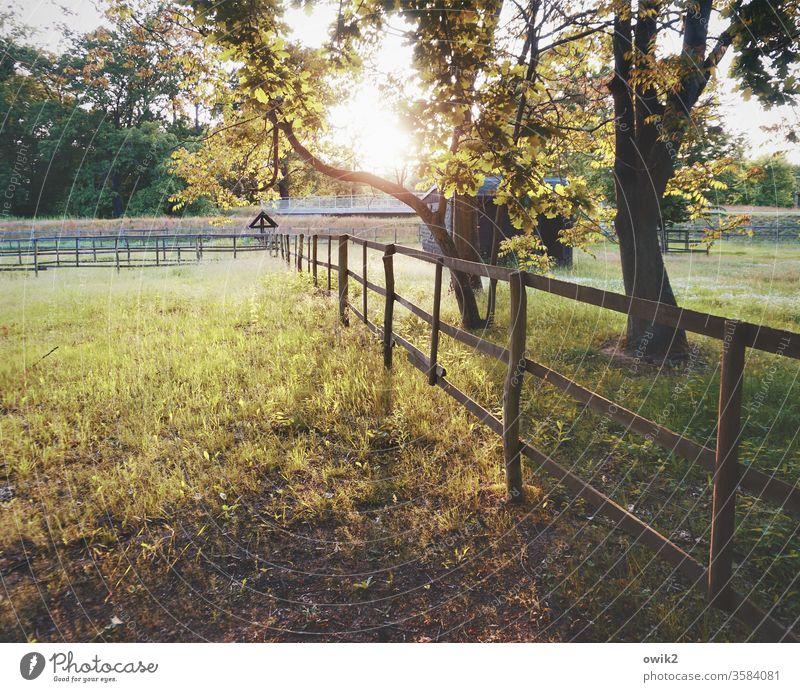 Cogent Meadow paddock Fence wood Evening huts bushes Gate Barrier Protection Boundary Sunlight Sunset Back-light Illuminate Brilliant Idyll Peaceful