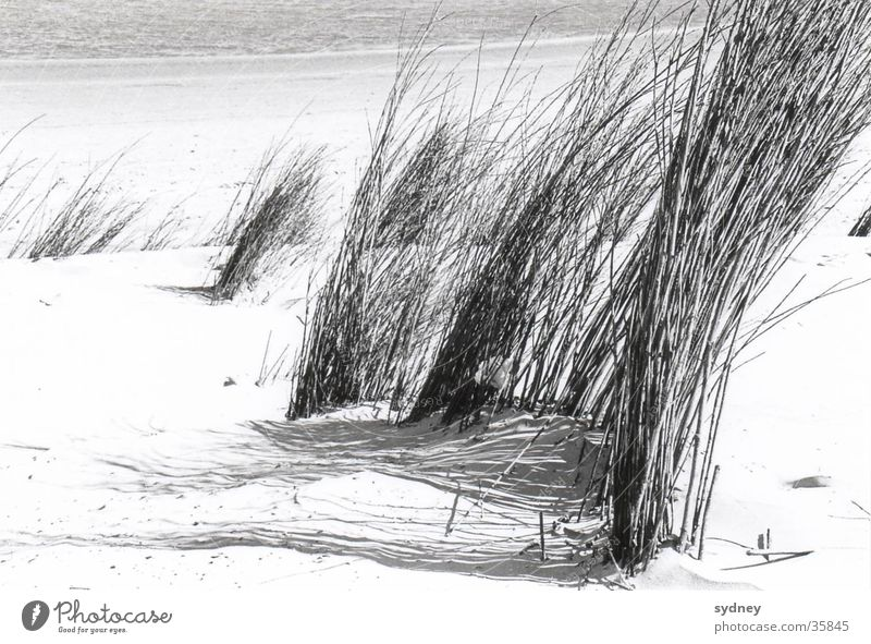 dunes Beach Grass Ocean Sand Wind Structures and shapes