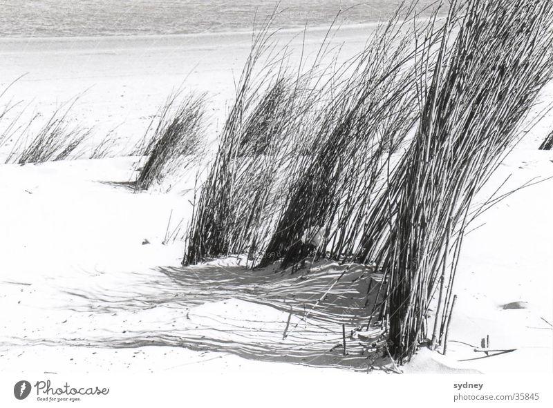 Ocean Beach Grass Sand Wind