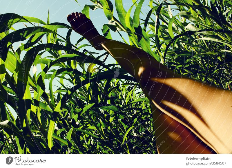 bare foot in the cornfield against the sky feet Maize field Maize plants leg Shadow play Margin of a field Break Field Plantation Agricultural crop Environment