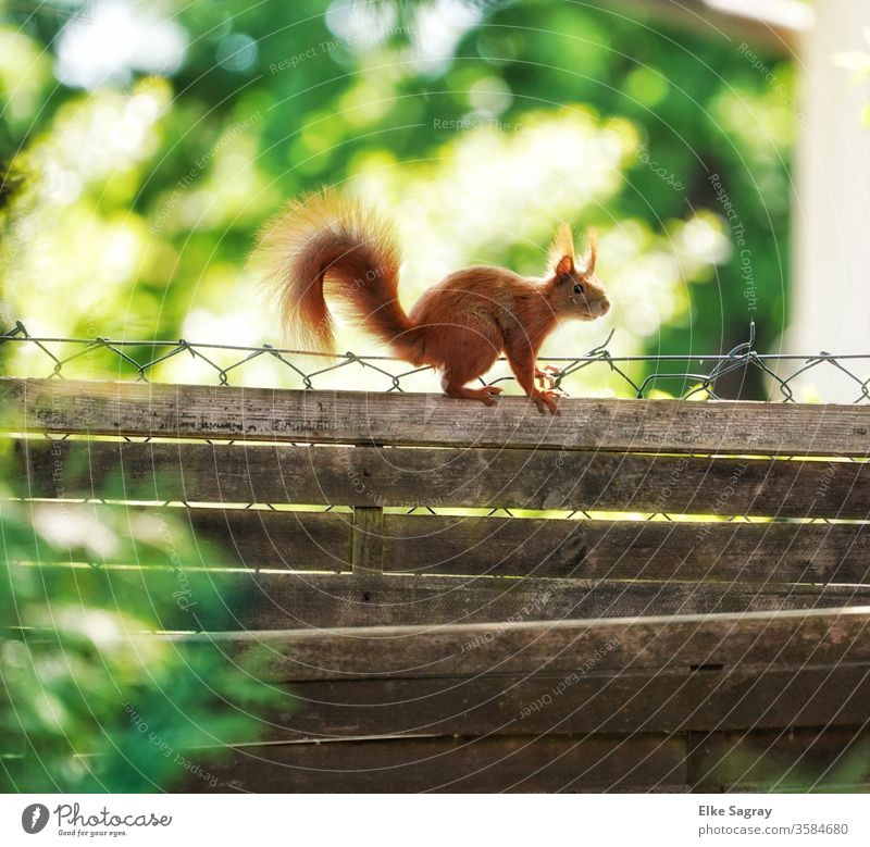 look over your own backyard fence... Animal Colour photo Exterior shot Nature Animal portrait Wild animal Day