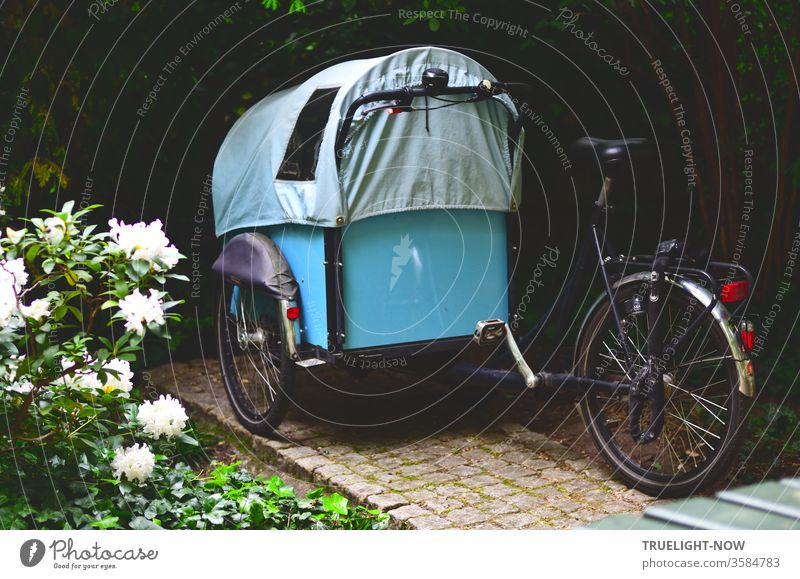 For city nomads - a cargo bike in a sky-blue covered wagon design waits in the dark corner of a Berlin backyard next to white peonies in full bloom for its next use