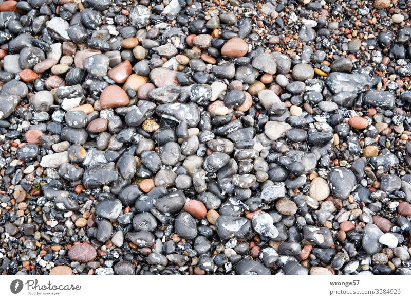 Many wet stones at the Baltic Sea beach coloured stones pebble Pebble flints Baltic beach Beach Pebble beach Wet Glittering colored stinking rich