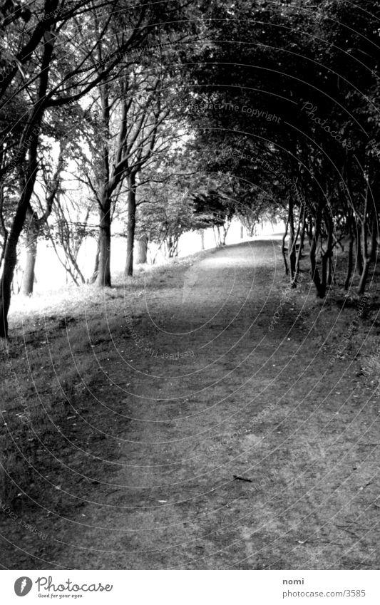 stroll Avenue Tree Light Empty Loneliness Calm Lanes & trails Contrast Branch