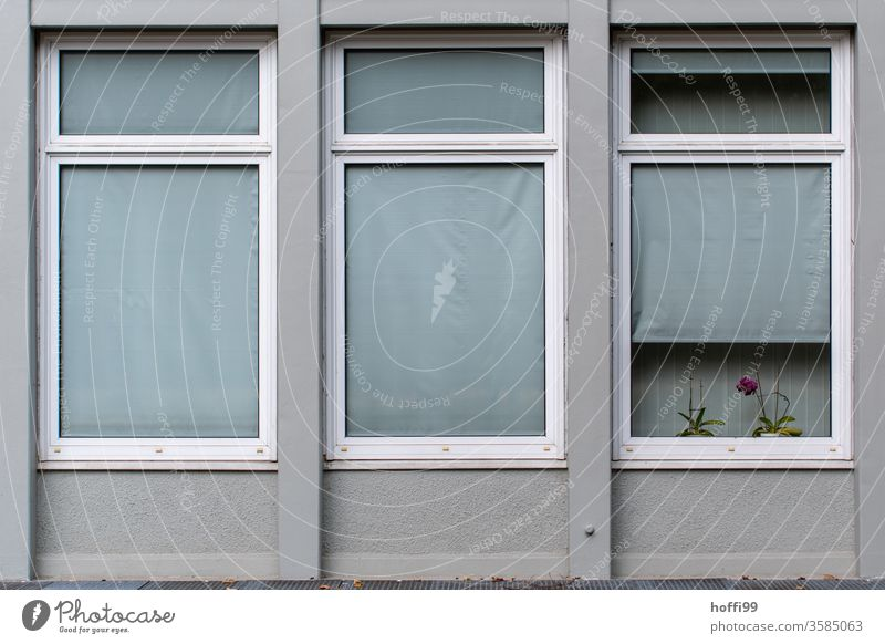 The orchid in the window of a monotonously dreary office building struggles for survival Orchid flowers Pink Plant Violet Venetian blinds conceit Old Facade