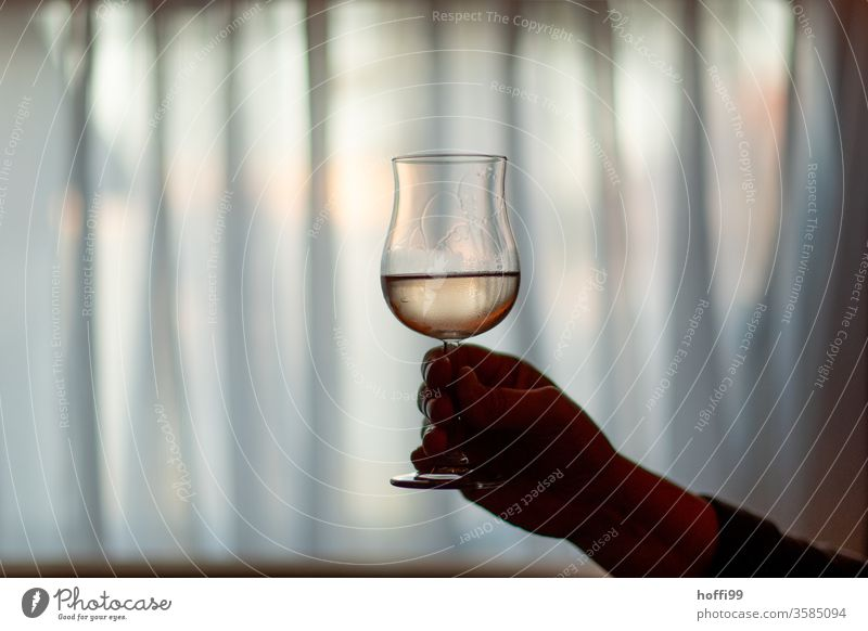 a glass of rosé in front of curtains in the diffuse semi-darkness of the room pink Vine Glass Toast Drinking Alcoholic drinks by hand Restaurant Wine glass Bear