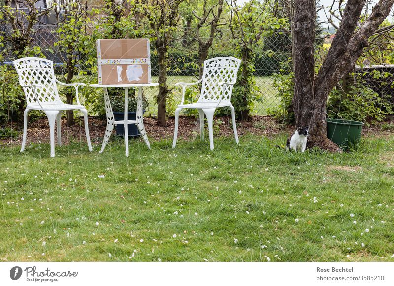 Seat in the garden with package and cat Garden seat green Exterior shot Deserted Colour photo Summer Meadow White Metal Package Cat Apple tree Lawn Outdoors