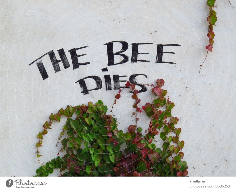 THE BEE DIES bee deaths Nature Environmental protection Bee Insect Eye System Plant Creeper pesticides Poison Day Colour photo Graffiti Wall (building)