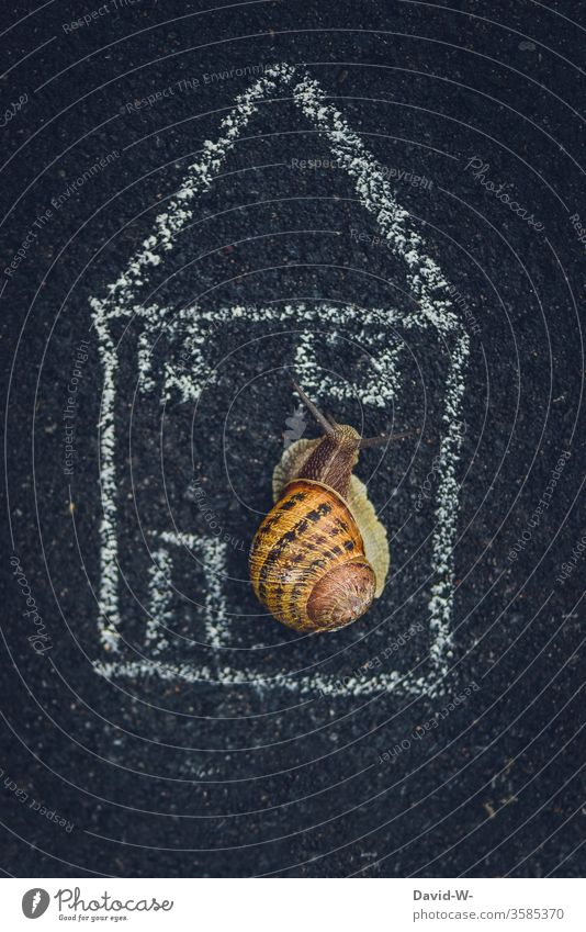 Semi-detached house - snail shell in snail shell Crumpet Snail shell Creativity creatively Drawing Chalk out Nature Vineyard snail escargot