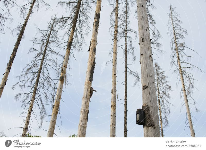 Bird house in a dead forest aviary Box Nesting aid nature conservation Environment Forest death Bark-beetle home dwell Life brut Bleak spruces Climate change