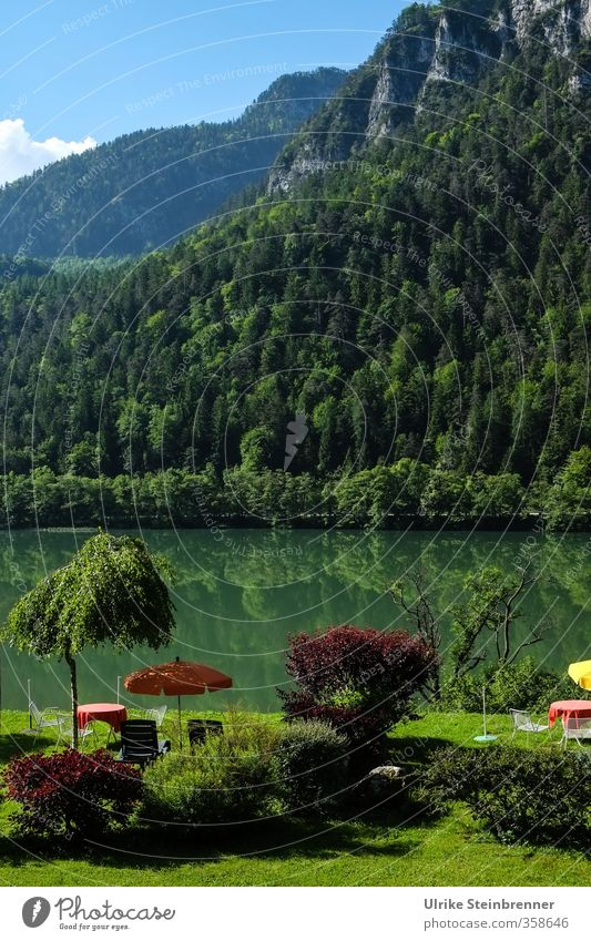Nature Vacation & Travel Green Tree Relaxation Loneliness Landscape Calm Forest Mountain Grass Swimming & Bathing Lake Healthy Garden Tourism