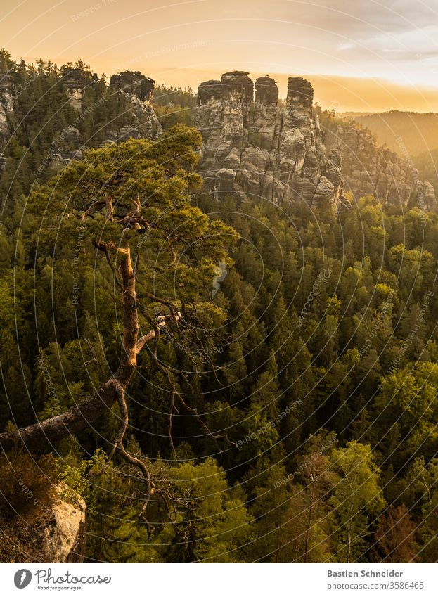 The famous pine near the Bastei in the Elbe Sandstone Mountains Landscape Rock Forest Elbsandstone mountains Summer Germany already Hiking Shadow Europe Trip