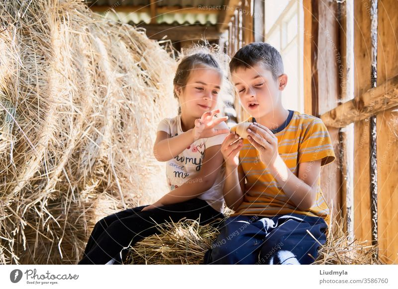 Two little kids are curiously looking at hen egg which they have suddenly found at hayloft during their game. children eggs surprised straw girl rural farmer