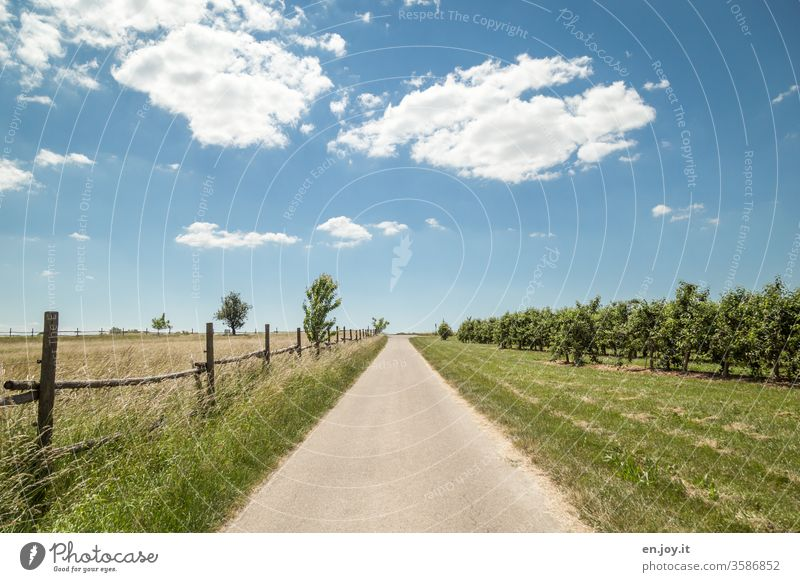 Asphalt Way off Lanes & trails Street Meadow Grass Fence orchard Fruit trees Horizon Blue Blue sky Beautiful weather Clouds Lawn Middle centred Field paddock