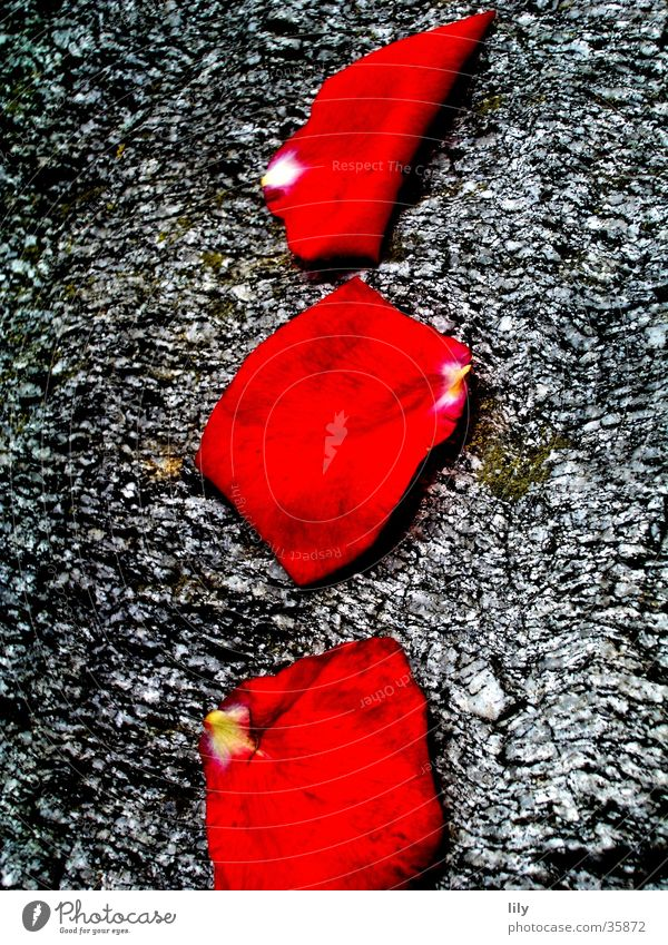 red-grey composition Red Gray Rose leaves Simple Stone Beautiful Nature Contrast Colour