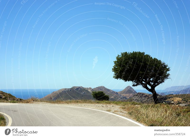 Lonely tree by the road Nature Sky Cloudless sky Horizon Beautiful weather Tree Hill Blue Brown Turquoise Colour photo Exterior shot Deserted Day