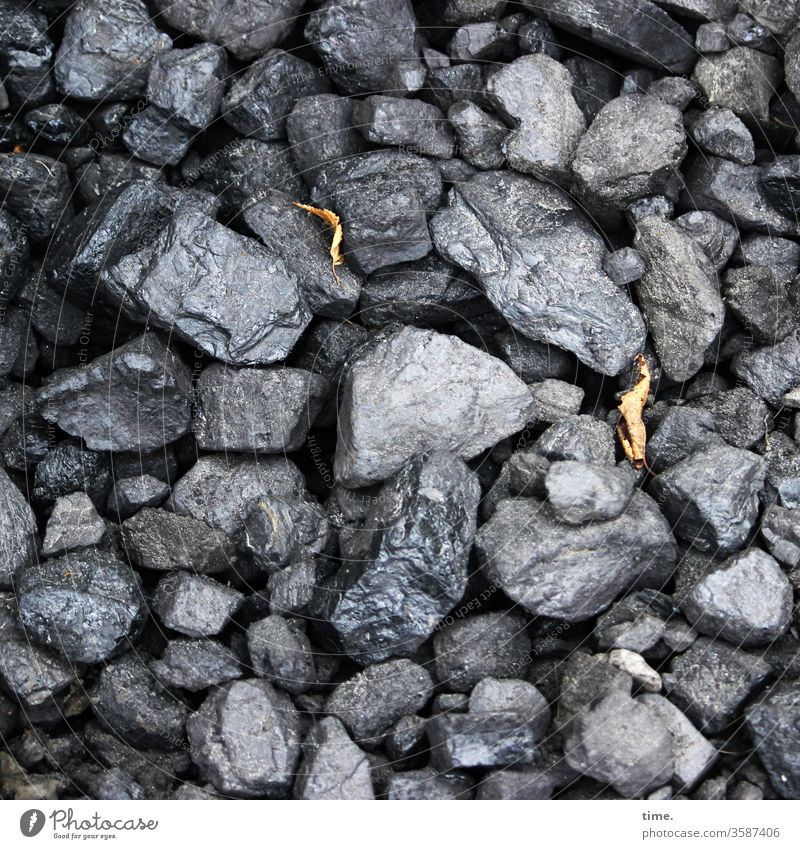 wet coal Coal pieces of coal fuel Autumn leaves Lie Heap warehouse Bird's-eye view Damp Wet Many disparate miscellaneous Black Gray Anthracite Fossil Energy