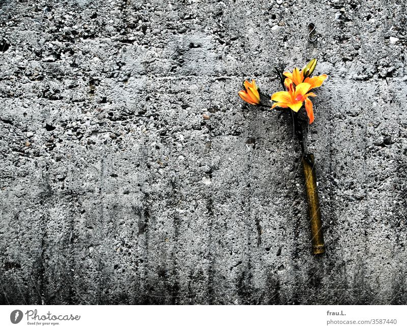 Joyfully the old grey concrete wall greeted the yellow flowers, but they were a bit short. Dugout Concrete Exterior shot Vase connected Flak tower Lily