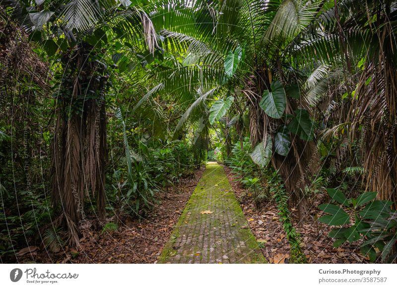 Amazon. Tropical Rainforest. Jungle Landscape. Amazon Yasuni National Park, Ecuador. South America. amazon ecuador coca yasuni rainforest south america