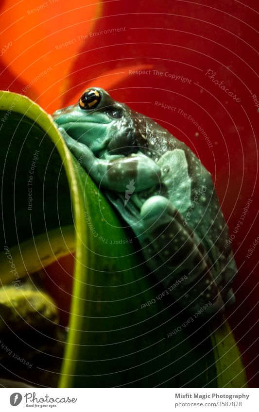 Tree frog on plant leaf treefrog nature zoo reptile