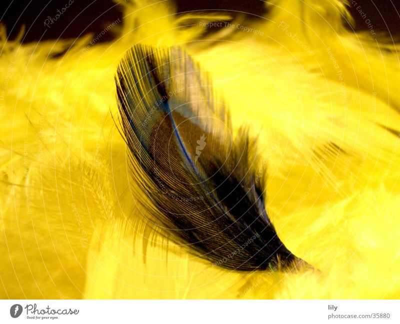 Yellow Dark Soft Feather Obscure