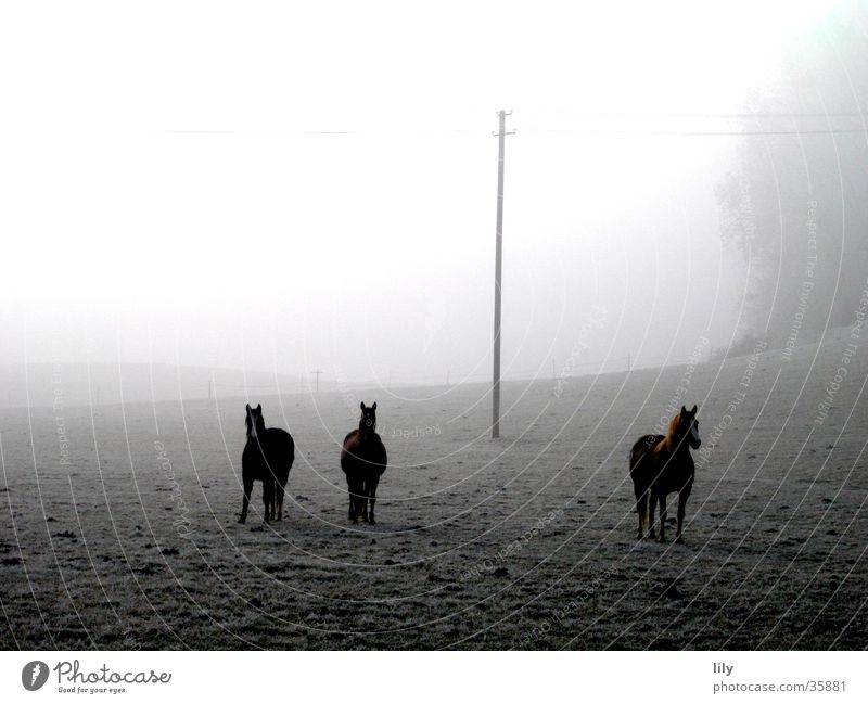 Horses in the fog Fog Mysterious Moody Curiosity Hoar frost Frost Pasture Freedom Happy Winter morning