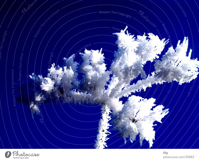 Beautiful White Sun Blue Cold Ice Frost Branch Fragile Blue sky Hoar frost Clink