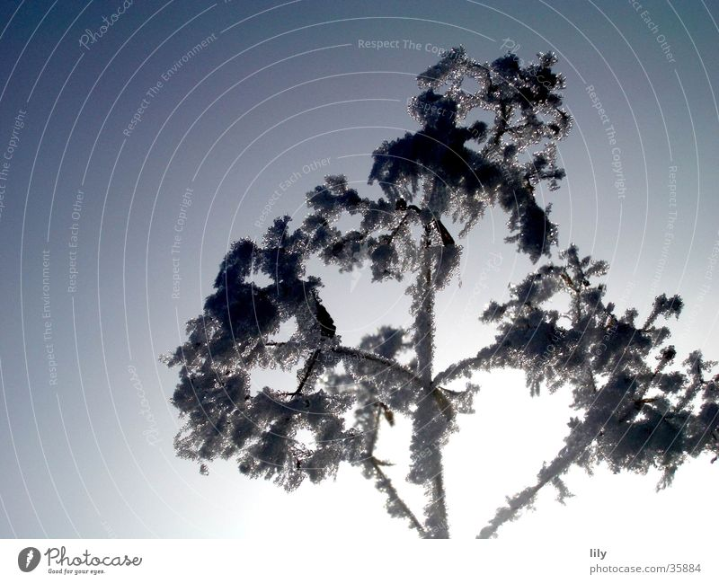 Sky Winter Cold Ice Frost Branch Frozen Hoar frost