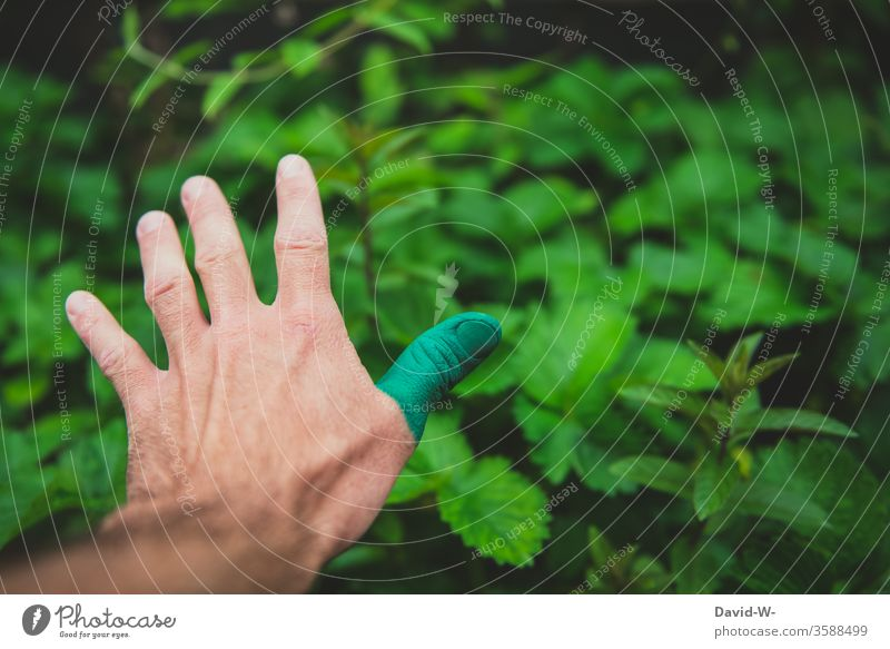 Nature - having a green thumb by hand Green thumb Love of nature Plant Colour photo flaked Gardener Summer Growth Detail Environment Human being Gardening