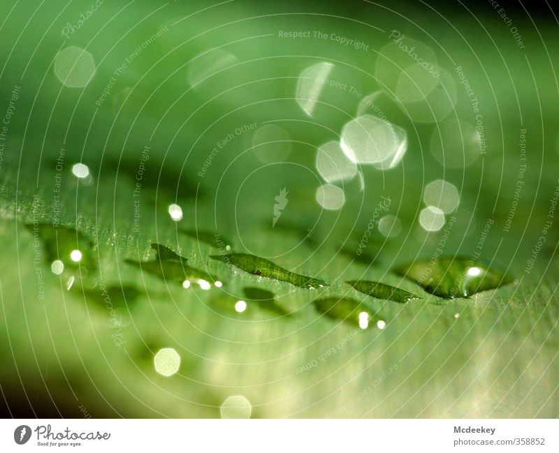 Nature Green Water White Summer Plant Leaf Black Environment Yellow Cold Gray Lighting Natural Park Glittering