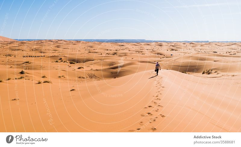 Anonymous traveler walking along sand dune in desert holiday tourist stroll blue sky nature morocco africa terrain sunny summer dry trip landscape adventure