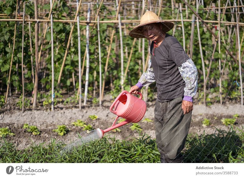 Ethnic farmer watering plants on plantation in hot summer day watering can watering pot garden oriental care agriculture agronomy cultivate pour man gardener