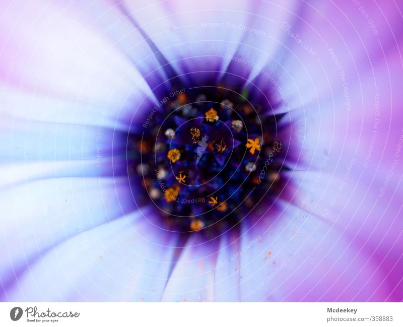 I am like that flower Nature Plant Flower Blossom Park Blossoming Fragrance Illuminate Exotic Beautiful Uniqueness Crazy Blue Brown Multicoloured Gray Violet