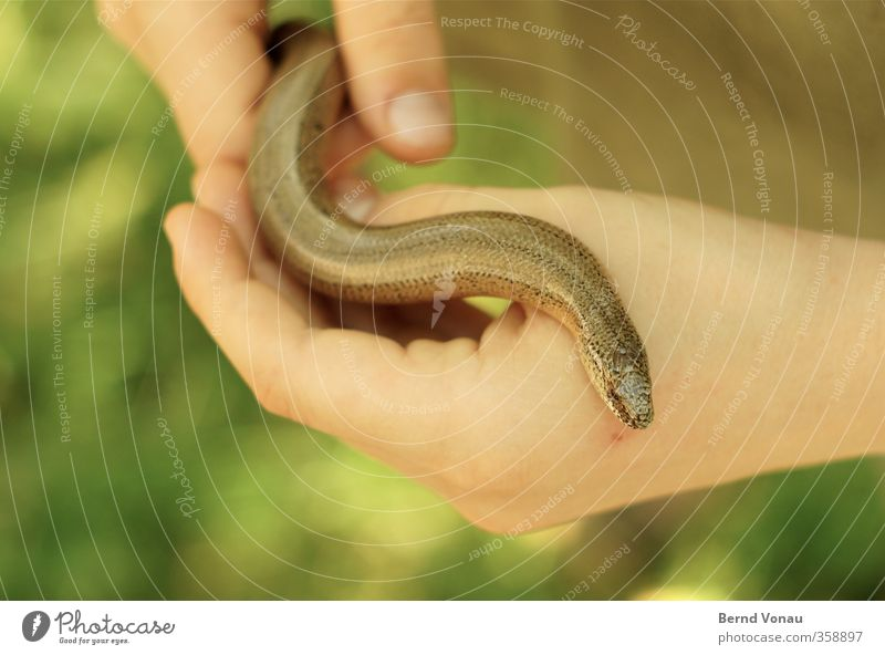 Human being Child Green Hand Animal Boy (child) Brown Infancy Fingers Observe To hold on Captured Snake 3 - 8 years Caress Glide