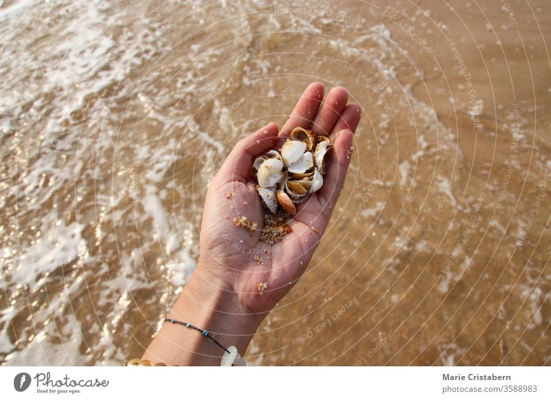 Enjoying the summer moment at the beach collecting seashells earthly texture the new normal summer during covid-19 social distancing