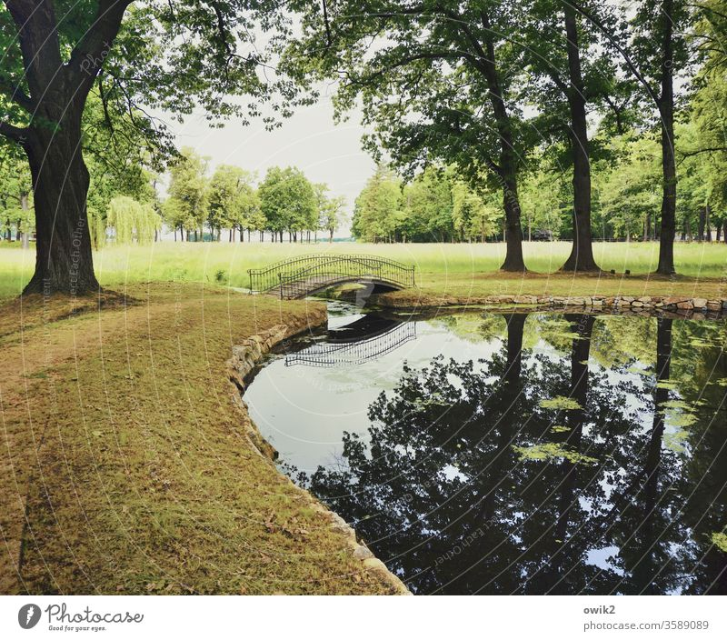 zestfully Pond Park silent bridge Arched bridge pile-lander Curved Elegant huts Water Meadow plants Exterior shot Colour photo Deserted Nature tree Reflection